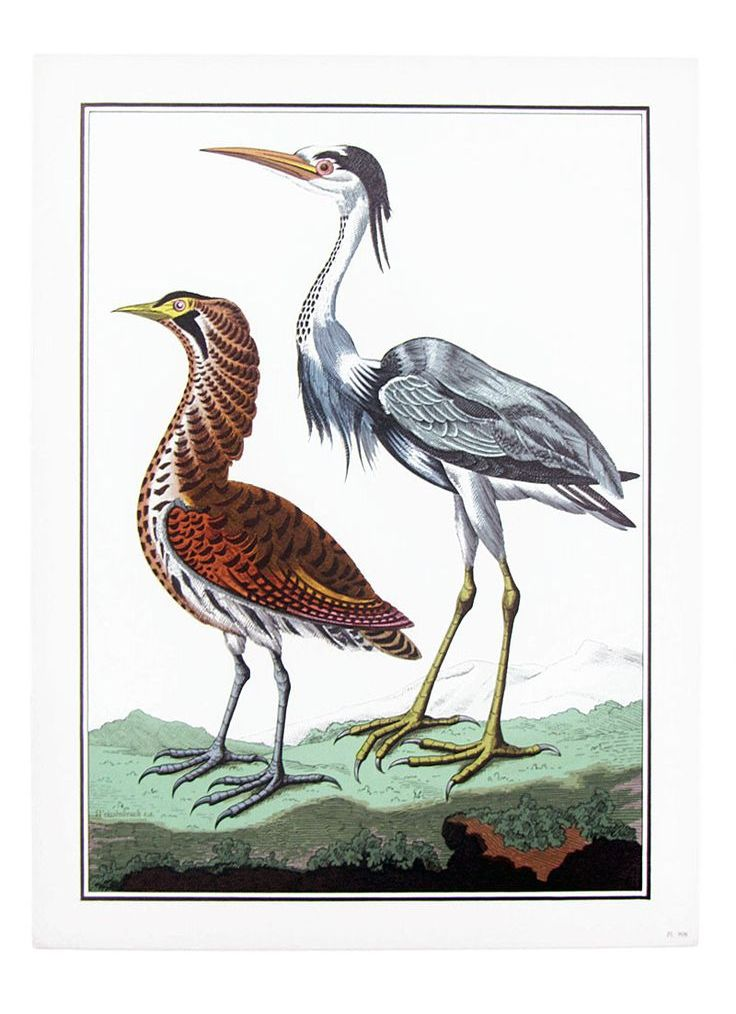 birds-belgium