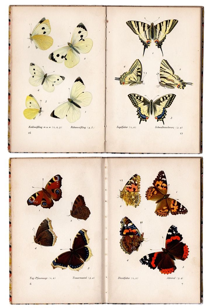 butterflies-vintage-poster